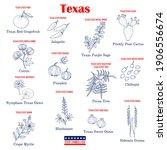 texas. set of usa official... | Shutterstock .eps vector #1906556674