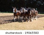 Six Horse Clydesdale Team...