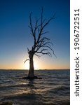 Large Dead Tree Silhouette At...
