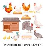 chicken in farm barn henhouse...   Shutterstock .eps vector #1906957957