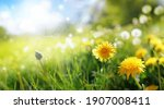 Beautiful Flowers Of Yellow...