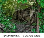 Ruins Of An Abandoned Hut In...