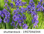 Abundant Flowering Of Bright...