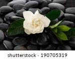 Gardenia With Leaf And Black...