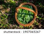 Wooden Basket Full Of Bear...