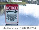 Alligator And Snake Warning...