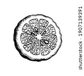 slice of bergamot orange. ink...   Shutterstock .eps vector #1907139391
