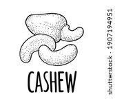 cashew nut with fetus. vector... | Shutterstock .eps vector #1907194951