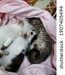 Cute Three Little Kitten...