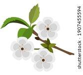 blooming flowering fruit tree... | Shutterstock .eps vector #1907455594