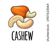 cashew nut with fetus. vector... | Shutterstock .eps vector #1907610064