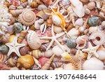 Seashells Background  Lots Of...