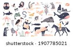 animals set with various... | Shutterstock .eps vector #1907785021
