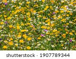 Wildflower Meadow Summer...