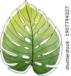 monstera leaf contour  on a... | Shutterstock .eps vector #1907794327