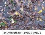Wet Fallen Leaves Lie On The...