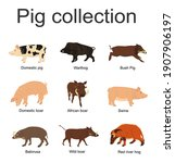 Pig Collection Vector...