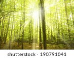 sunny beams in forest | Shutterstock . vector #190791041