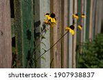 Yellow Flower At The Wooden...