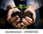 farmer hand holding a fresh... | Shutterstock . vector #19080436
