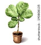 watercolor pot plant  ficus... | Shutterstock .eps vector #190808135