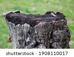 Up Close Detailed Tree Stump