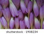 flowers | Shutterstock . vector #1908234