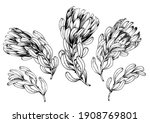 ink hand drawn set of exotic...   Shutterstock .eps vector #1908769801