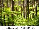 lush green ferns  tree ferns...   Shutterstock . vector #190886195