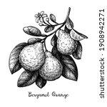 bergamot orange branch with...   Shutterstock .eps vector #1908942271