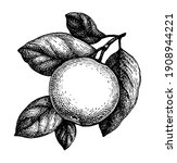 apple with leaves. ink sketch... | Shutterstock .eps vector #1908944221