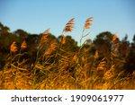 The Setting Sun Lights Sawgrass ...