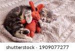 Kitten sleep on cozy blanket...