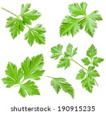 Collections Of Parsley Leaves...