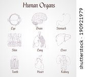 human organs outline icons set... | Shutterstock .eps vector #190921979