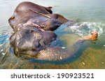 Elephant Swimming In River