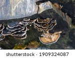 Tree Fungus Viewed From Above