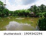 Flamingo Pond With Nice...
