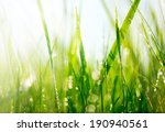 Постер, плакат: Grass Fresh green grass