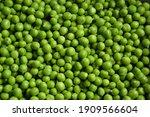 green pea background. pea pods... | Shutterstock . vector #1909566604
