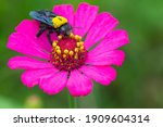 A Beetle On The Beautiful Pink...