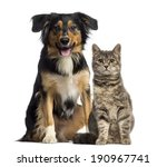 Stock photo cat and dog sitting together 190967741