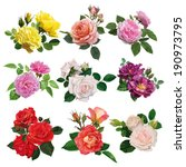 set of flowers, multicolored roses with leaves