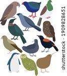 cute new zealand birds...   Shutterstock .eps vector #1909828651