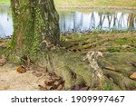 View Of A Tree Trunk Overgrown...