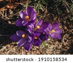 The First Spring Flowers Are...