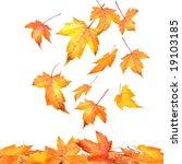 maple leaves falling  on white... | Shutterstock . vector #19103185
