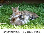 Stray Cat Mother Cat And Kittens
