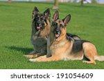 Two German Shepherds Laying...