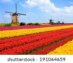 Vibrant Tulips Fields With...